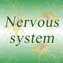 Nervous system – state of mind